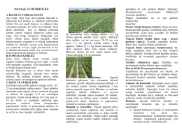 Ispanak Yetiştiriciliği - Ankara İl Gıda Tarım ve Hayvancılık Müdürlüğü