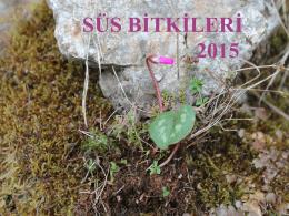 Süs Bitkileri 2015 ders notları