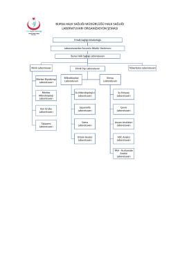 Organizasyon Şeması - Bursa Halk Sağlığı Müdürlüğü