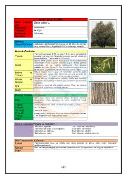Salix alba - KABSIS | Kent Ağaçları Bilgi Sistemi