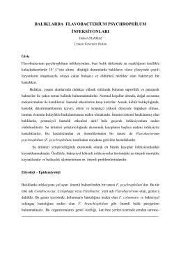 flovobacterium psychrophilum enfeksiyonları