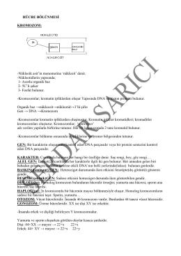 İndir (PDF, Bilinmeyen) - Biyoloji Okur