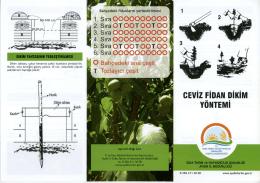 CEVİZ FİDAN DİKİM YÖNTEMİ - Aydın İl Gıda Tarım ve Hayvancılık