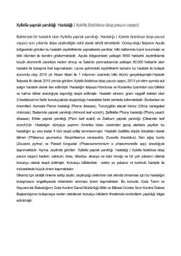 Xyllella yaprak yanıklığı Hastalığı ( Xylella fastidosasbsp pauca ceppo)