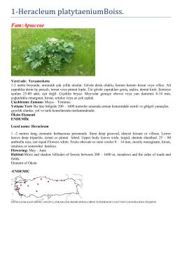 Fam : Liliaceae