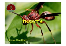 insecta - UzmanVeteriner.Com.tr | Uzman Veteriner
