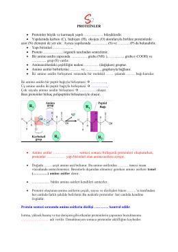 PROTEİNLER • Proteinler büyük ve karmaşık yapılı