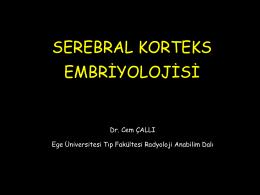 SEREBRAL KORTEKS EMBRİYOLOJİSİ