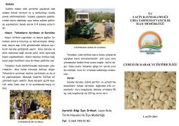 çerezlik kabak yetiştiriciliği - Çorum İl Gıda Tarım ve Hayvancılık