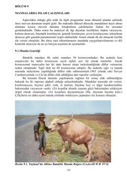 bölüm 9-10 - istanbul manda