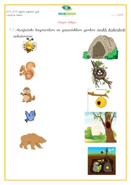 1.) Aşağıdaki hayvanları ve yaşadıkları yerleri renkli kalemlerle
