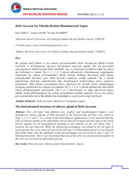 Helix lucorum`un Tükrük Bezinin Histokimyasal Yapısı