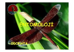 Odonata - UzmanVeteriner.Com.tr | Uzman Veteriner