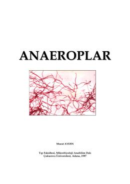 ANAEROPLAR - Murat Aydın