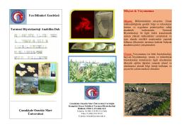 Fen Bilimleri Enstitüsü Tarımsal Biyoteknoloji Anabilim Dalı
