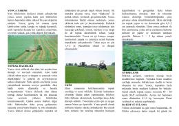 Yonca Tarımı - Kütahya İl Gıda Tarım ve Hayvancılık Müdürlüğü