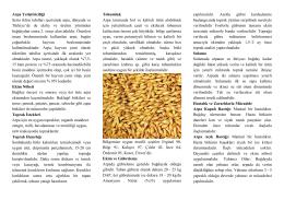 Arpa Yetiştiriciliği - Kütahya İl Gıda Tarım ve Hayvancılık Müdürlüğü
