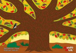 Ağaçkakanlar Meşe Palamudu Saklıyor