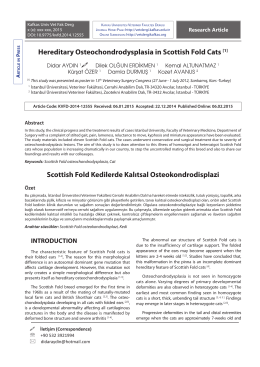 Hereditary Osteochondrodysplasia in Scottish Fold Cats [1]