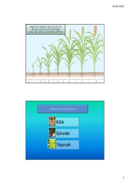 MBG 112 Biyoloji II Ders 11