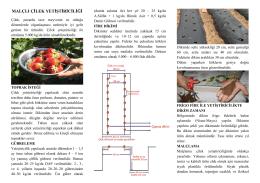 malçlı çilek yetiştiriciliği - Kütahya İl Gıda Tarım ve Hayvancılık