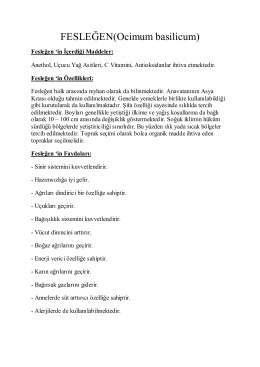 Fesleğen - YazarVizor