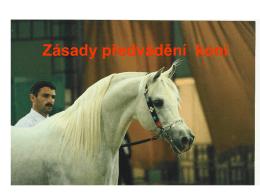Zásady předvádění a posuzování koní a jejich výběr do plemenitby