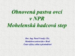 Obnovená pastva ovcí v NPR M hl ká hd á t Mohelenská hadcová step