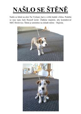Psí detektiv - našlo se štěně
