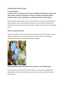 Švestka: jakou odrůdu si vybrat Tereza Macháčková Švestka a