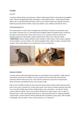 F1 koťata Co je F1? - Ossirian Bengals Cattery