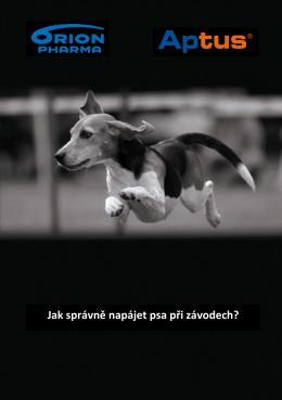 Jak správně napájet psa při závodech?