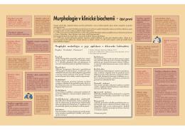 Murphologie v klinické biochemii - část první