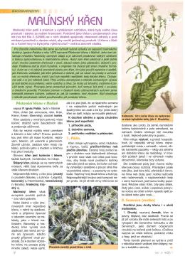 RETRO článek: Malínský křen