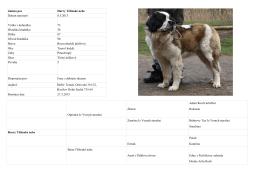 Jméno psa Harry Těšínské nebe Datum narození 8.5.2013 Výška v