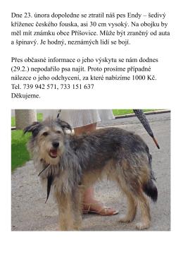 Dne 23. února dopoledne se ztratil náš pes Endy – šedivý kříženec