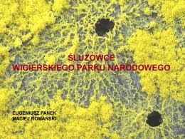 """Panek E., Romański M. """"Śluzowce Wigierskiego Parku Narodowego"""""""