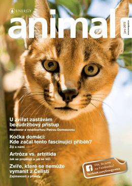 U zvířat zastávám bezúdržbový přístup Kočka domácí: Kde začal