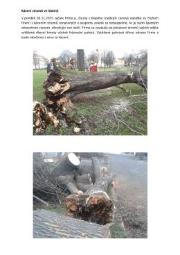 Kácení stromů ve Slatině V pondělí 30.11.2015 začala