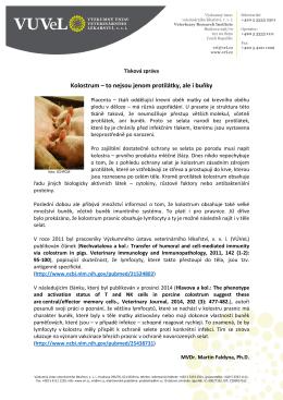 Martin Faldyna - Kolostrum – to nejsou jenom protilátky, ale i buňky