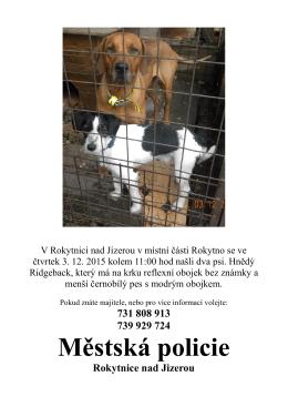 Informace o nalezených psech + fotografie