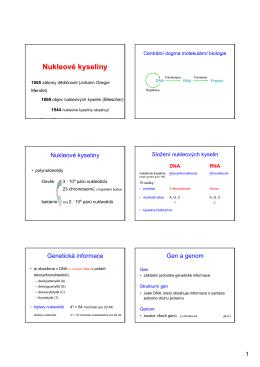 13-bio-07. nukleové kyseliny, dělení, struktura, složení