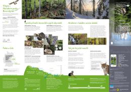 lesní - Nationalpark Bayerischer Wald