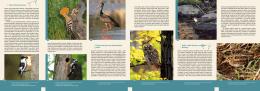 Ptáci Podyjí/Thayatalu - Správa národního parku Podyjí