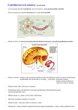 Centrální nervová soustava : mozek,mícha