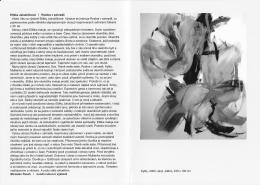 Miroslav Pesch: text k výstavě