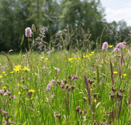 Seggenrieder und Sumpfgebüsche   Ostřicové porosty a mokřadní