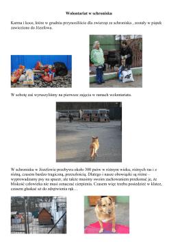 Relacja z wolontariatu w schronisku w Józefowie.