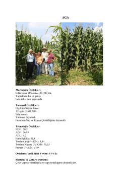 aga silajlık mısır çeşit özellikleri 2016